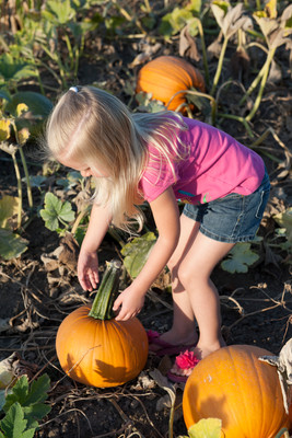 Girl at pumpkin patch at Bauman Harvest Festival - Oregon