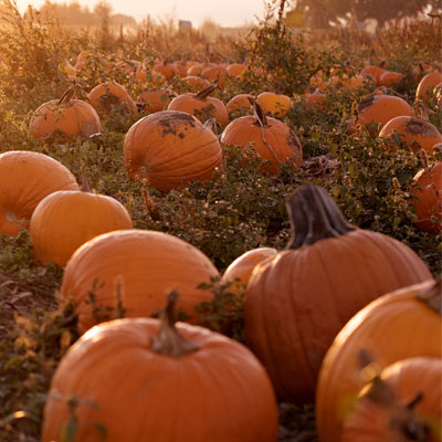 Pumpkin Patch - Bauman Farms & Garden