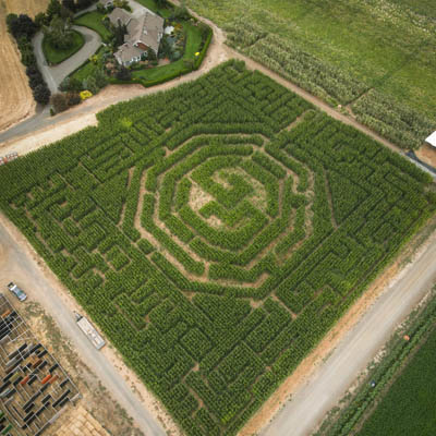 Corn Maze at Bauman's Harvest Festival